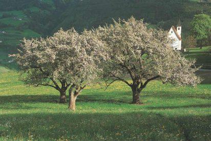 Cuatro planes para disfrutar de los valles en flor de las manzanas MARLENE®