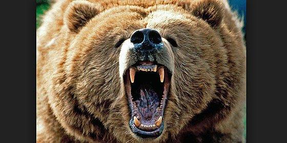 El profesor que es atacado por un oso feroz delante de sus alumnos