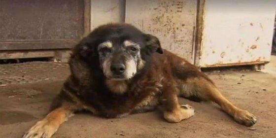 Muere Maggie, la adorable perrita más vieja del mundo