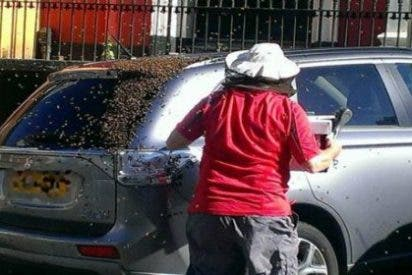 El coche de la abuela que ha sido perseguido por 20.000 abejas durante dos días