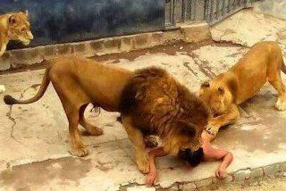 [VÍDEO] El suicida se lanza a los leones y provoca la muerte de dos animales