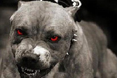 El castigo del ISIS a sus díscolos jefes: ¡devorados vivos por perros rabiosos!