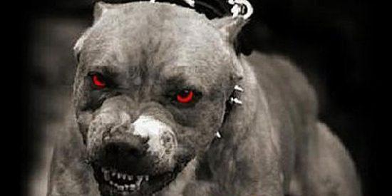 La espantosa muerte de un niño de 9 años atacado el día de Navidad por cuatro perros