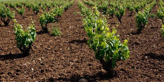 El Santander lanza una App con información actualizada para el sector agroalimentario