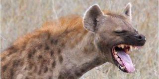 """Gaspar Albertos: """"La revolución de las sonrisas...de hiena"""""""