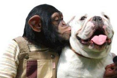 El mono Pankun y su perro James, la extraña pareja que arrasa en Japón