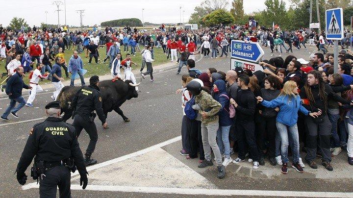 La Junta no autoriza al Ayuntamiento de Tordesillas celebrar el Toro de la Vega