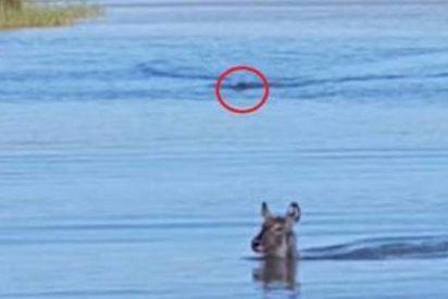 La persecución del cocodrilo al antílope que hace llorar a los turistas
