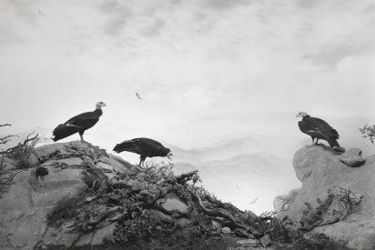 Hiroshi Sugimoto y sus cuadros