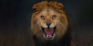 El león asesino