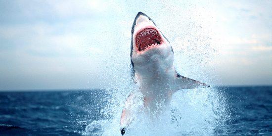 ¿Sabes por qué atacan realmente los tiburones a los humanos?