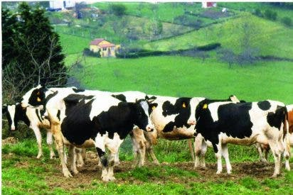 La Junta destina ayudas a los ganaderos para compensar el coste de la vacunación obligatoria frente a la lengua azul