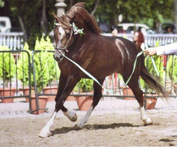 Valdestillas se convierte en el epicentro de la élite del mundo del caballo