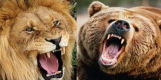 Las 10 peleas de grandes animales más feroces que puedas imaginar