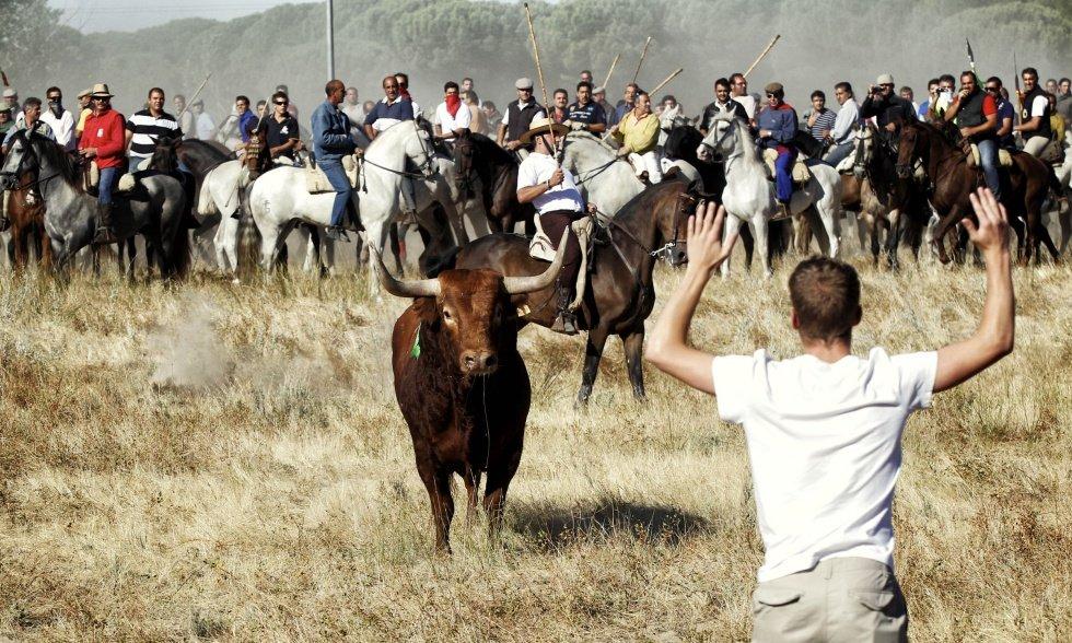 El Toro de la Peña es la opción taurina que sustituye al Toro de la Vega en Tordesillas