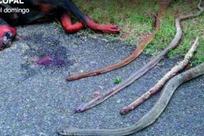 El doberman que ha sacrificado su vida para salvar a sus dueños del ataque de 4 serpientes