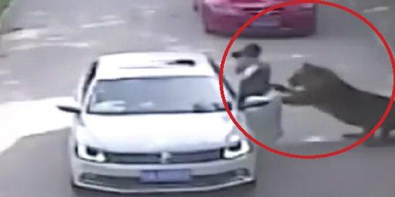 [VÍDEO] El tigre devora a la mujer tras una violenta discusión conyugal
