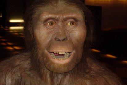 Lucy, la madre de la Humanidad, murió al caer de un árbol hace 3,2 millones de años
