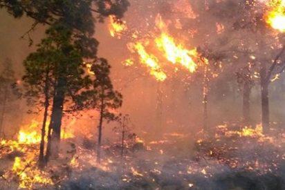 Los rescoldos del incendio de La Palma: los bomberos forestales de Tenerife cargan contra el Cabildo