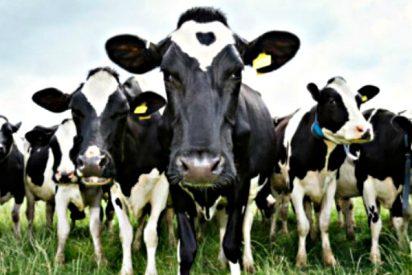 VOX Andalucía exige un apoyo decidido a la España vaciada y al sector agroganadero
