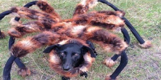 Terror en Internet: el gigantesco perro-araña mutante ataca de nuevo