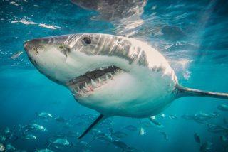 Los 3 peores y más feroces ataques de tiburones jamás registrados