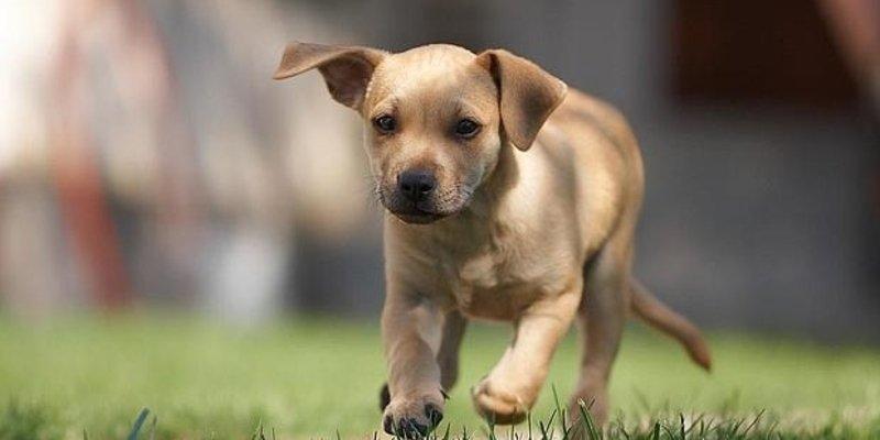 Los desaprensivos abandonan al perro en la autovía y el animal corre tras el coche de sus dueños hasta desfallecer