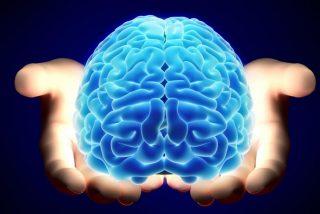 La extensión de la megafauna impulsó el desarrollo del cerebro humano