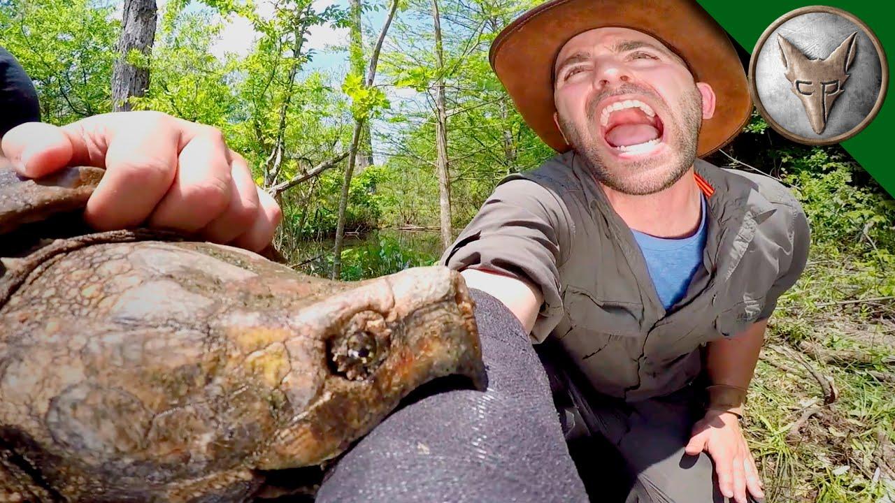 [VÍDEO] La tortuga muerde el pene al chef para no acabar en la sopa