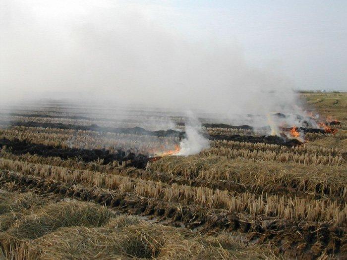 Agricultura y Ganadería publica la orden que autoriza la quema de rastrojos de cereales