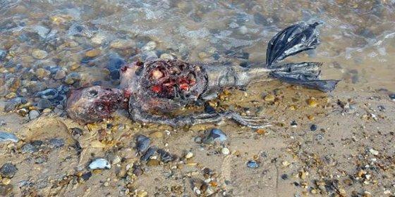 [VÍDEO] El apestoso caso del cadáver de una sirena descubierto en la playa