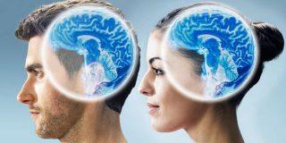 Cerebro: las 5 diferencias entre el hombre y la mujer