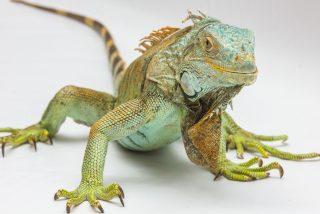 La noche de la iguana: la épica huida de las serpientes asesinas