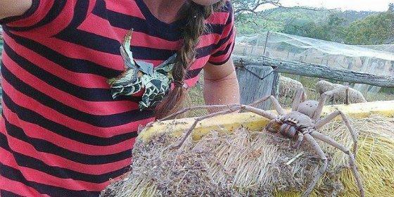 La escalofriante araña gigante que pone patas arriba a Internet