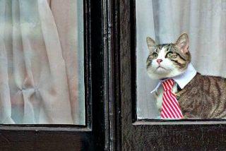 ¿Usa Julian Assange a su gato para enviar mensajes secretos desde la embajada de Ecuador en Londres?