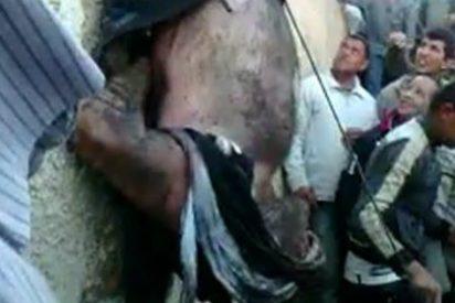 [VÍDEO] El linchamiento de un ratero cabeza abajo por una histérica horda musulmana