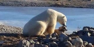 La espantosa verdad tras este vídeo del tierno oso polar que acaricia a un perro