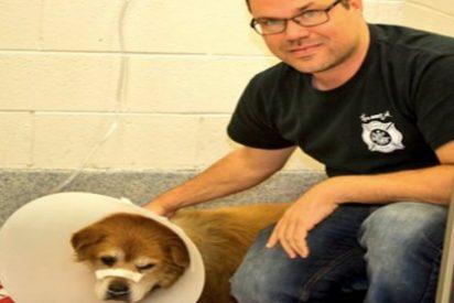 El perro que ha salvado a su dueña de morir abrasada en un incendio