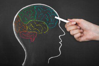 Descubren en qué parte del cerebro se esconde el estrés