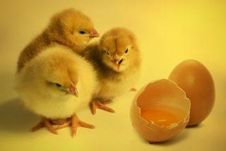 ¿Comes hasta 3 huevos al día? Pues mira lo que pasa en tu cuerpo...