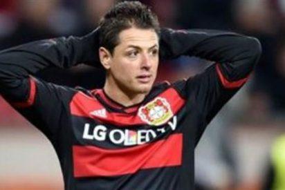 ¡En vilo! Chicharito quita el sueño a los dirigentes del Bayer Leverkusen