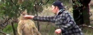 [VÍDEO] El hombre que boxea con un canguro para salvar a su perro
