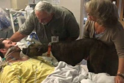 La perrita que se despide de su dueño antes de que lo desconecten en el hospital