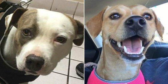 Rescatan a dos perras que eran alquiladas para realizar servicios sexuales