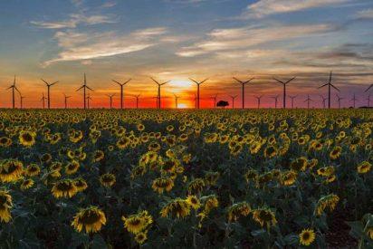 Las mejores propuestas en renovables para luchar contra el cambio climático