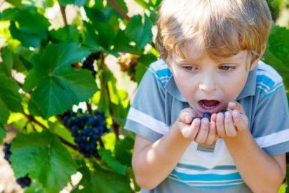 Los niños menores de 5 años no deben comer uvas enteras