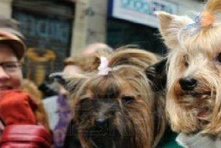 La iglesia de San Antón bendecirá a más de 13.000 animales en el día de su patrón