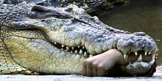 Así arrebatan de las fauces del cocodrilo al niño que estaba devorando