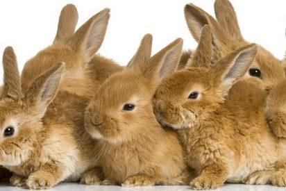 'Los conejos también tienen derechos'; animalistas los exigen en el Parlamento Europeo