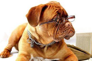 ¿Quieres saber qué tipo de dueño de perro eres?